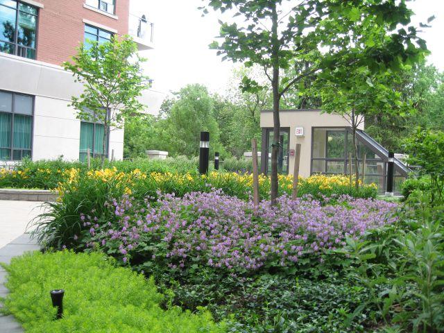 Stambena zgrada – Krovni vrt u 319 Merton ulici u Torontu