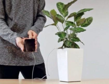 Osmomartovsko cveće konačno ima novu funkciju: Puniće nam baterije!